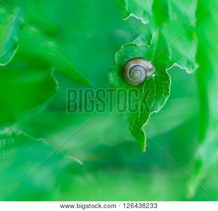 Beautiful Snail Macro