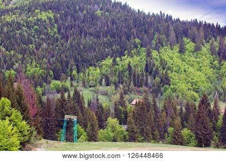 landscape consisting of a green lowland on the foreground and fir-trees on the Carpathians mountains with sky on the background