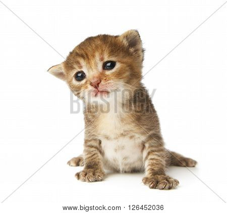 Cute grey striped kitten. Cute sad kitten 2 weeks old, creeping isolated at white background. Adorable pet. Small heartwarming kitten. Little cat. Closeup isolated. High key