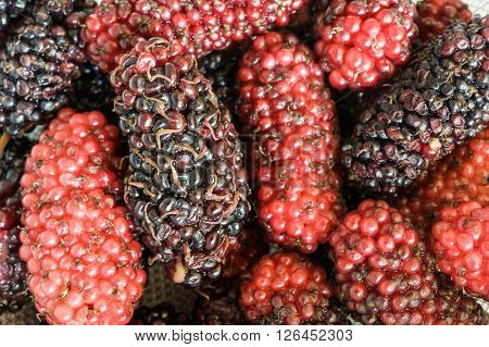 Delicious And Healthy Boysenberry