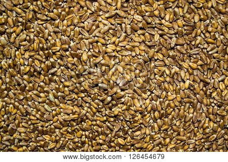 Processed Organic Wheat Grains As Agricultural Background.