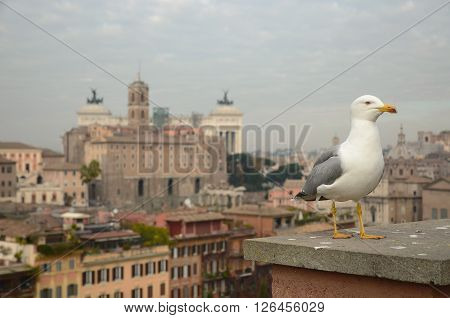 a seagull standing with background of Rome city in the morning