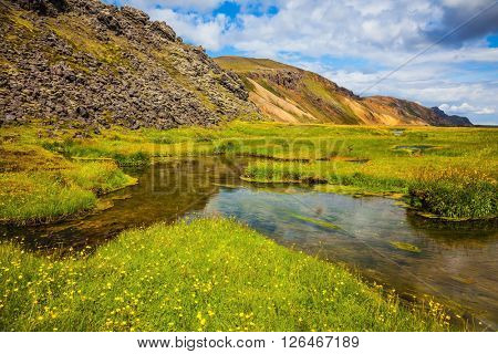 Green grass among hot springs. The picturesque valley in the National Park Landmannalaugar