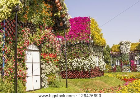 background landscape view of a street with houses made of greenery and flowers in the park Dubai Miracle Garden, United Arab Emirates