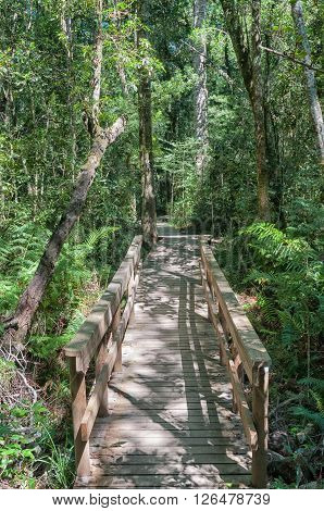 Bridge on the trail to the 1000 year old yellowwood tree in the Tsitsikama Forest near Storms River in the Eastern Cape Province of South Africa