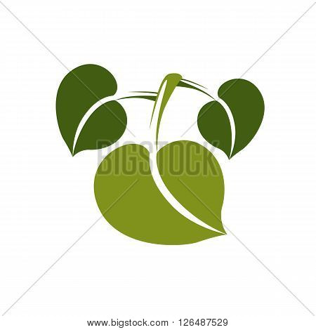 Single Vector Flat Green Leaf Isolated On White Background. Herbal And Botany Symbol, Spring Season