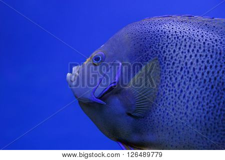 close up of tropical fish in aquarium