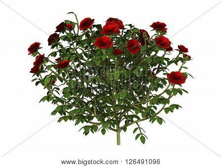 3D Illustration Red Rose Bush On White
