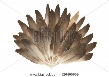 Fan made of the gray feathers isolated