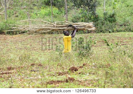 FOND BAPTISTE, HAITI - FEBRUARY 18, 2016:  A man carrying a long load of cut branches on his head, a sharp sickle in one hand.
