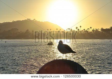 Seagull in backlight at sunset, Santa Barbara, California ** Note: Visible grain at 100%, best at smaller sizes