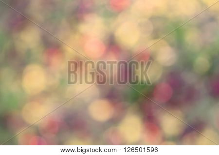 Bright colored splashes in red green and yellow tones. Bokeh effect in the background illustration to create a background for a picture.