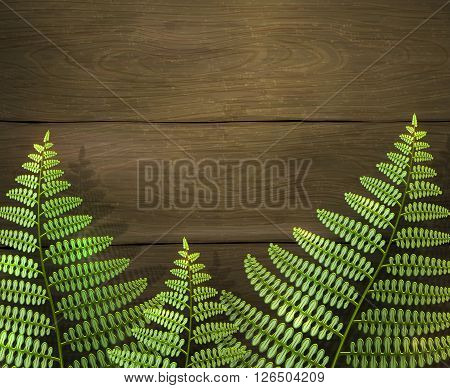 Realistic summer background with green fern leafs on wooden texture. Outdoor camping adventure. Design template, vector illustration.