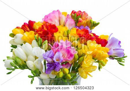 Bunch of fresh freesia flowers close up isolated on white background