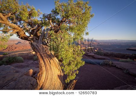Juniper Tree Canyon At Sunset