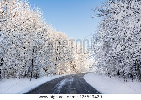 A snowy winter scene along a winding road with fresh snow clinging to the trees and a bright blue sky.