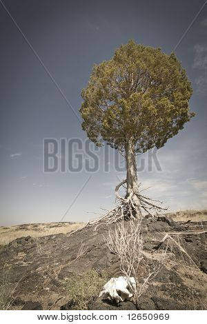 Weathered Tree In Desert