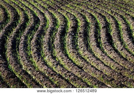 Rows of furrows for crops growing in agricultural field