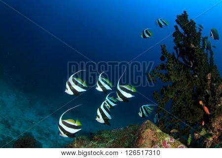 Fish on coral reef in Similan Islands, Thailand
