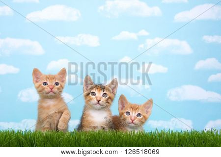 Three Kittens In Tall Grass With Blue Sky Background White Fluffy Clouds.