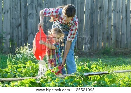 Little gardener girl is helping her mother to pour vegetable garden bed with green cucumbers