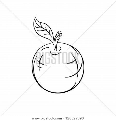 Apple. Vector hand drawn sketches vector illustration on white background - stock vector