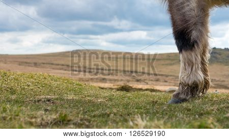 A concept photgraph of a wild ponies feet on Dartmoor