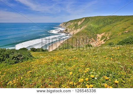 Pacific Ocean from Tomales Point Trail, Point Reyes National Seashore