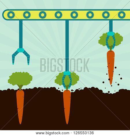 Mechanical Harvesting Carrots