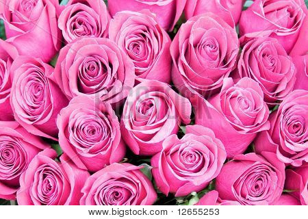 roses everywhere -  of
