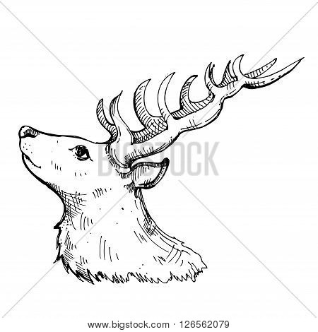 hand drawn ink deer on white background. Coloring page - design for adults poster print t-shirt invitation banners flyers.