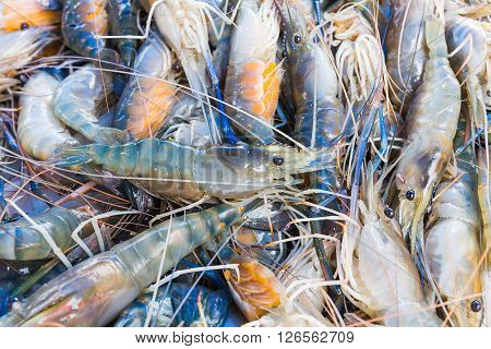 Fresh Prawn Shrimp On The Market