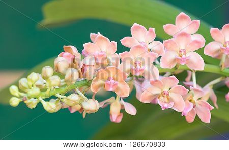 closeup orchid flower background. flower background. orchid