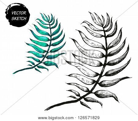 Vector Illustration of Palm Tree Leaf Sketch for Design. Palm Tree Hand Drawing Floral on Beach. Palm Tree Ink Element Template. Palm TreeIsolated on White