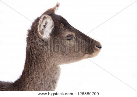 Side view of hind head on white background