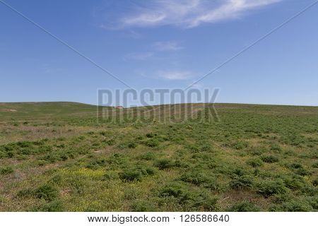 Among The Hills Of The Steppe