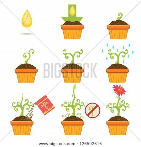 Planting The Seed Step By Step Istruction Cartoon Simple Style Flat Vector Illustrations Set On White Background