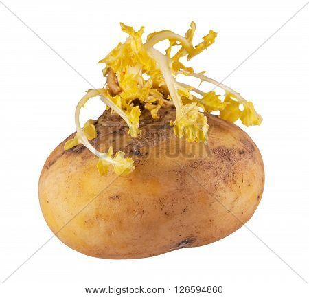 Spoiled turnip isolated on a white background