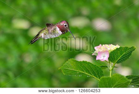 Hummingbird over green bright summer sunny background