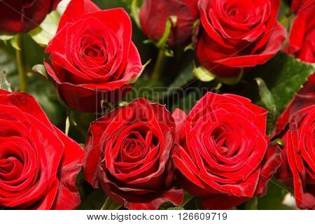 Background of red roses. Red roses in the bouquet. Festive bouquet of flowers with lots of roses. Romantic gift for loved ones.