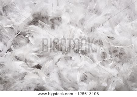 Background texture of a thick layer of soft white down feathers probably from a duck or goose viewed full frame from above