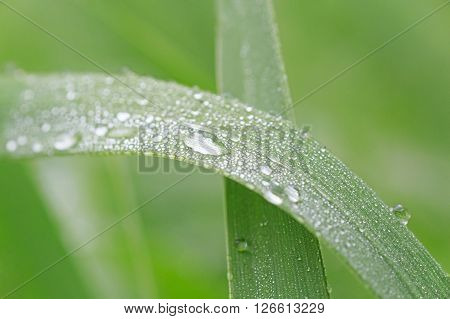 close up of dew drops on blade
