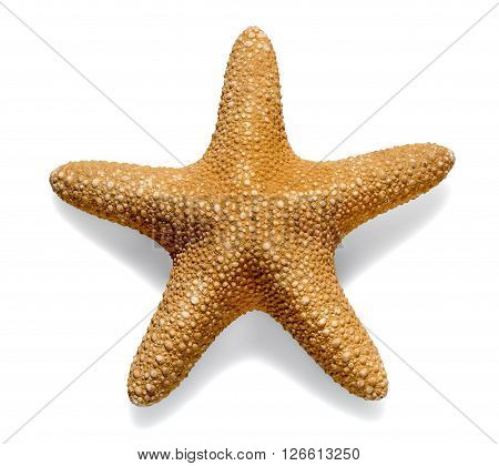 Dried Sea Star Or Starfish On White