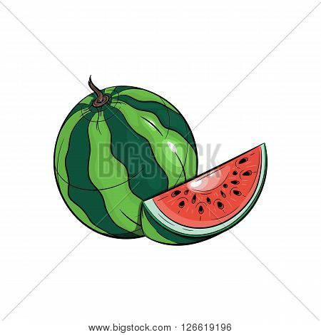 Vector watermelon illustration. Slice of watermelon, watermelon isolated on white background. Vector sketch hand drawn fruit - stock vector
