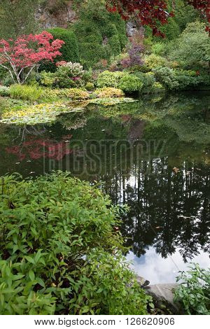 In pond, overgrown with lilies, reflected trees and flowers. Delightful landscaped and floral park Butchart Gardens on Vancouver Island