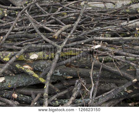 Pile of chopped firewood stock bole wood