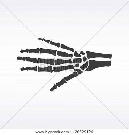 Vector illustration hand bones. Orthopedic human hand skeleton icon. Diagnostic center