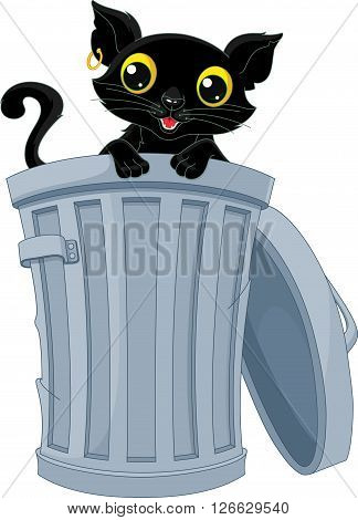 Stray cat peeking out of the trash can.