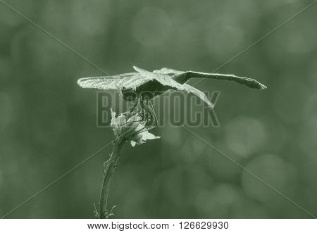 close up of dragonfly on dry plant