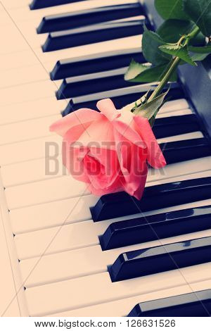 Pink rose on piano keyboard